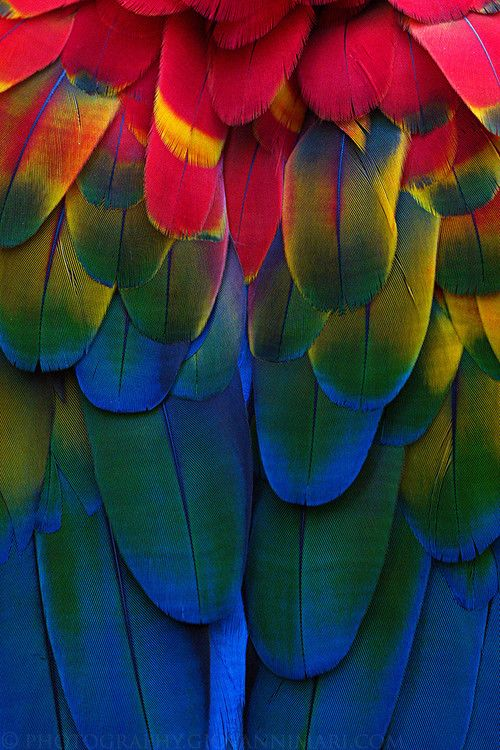 f8b5b4a658f6ce8aadade239a011dcf7--rainbow-colors-giovanni