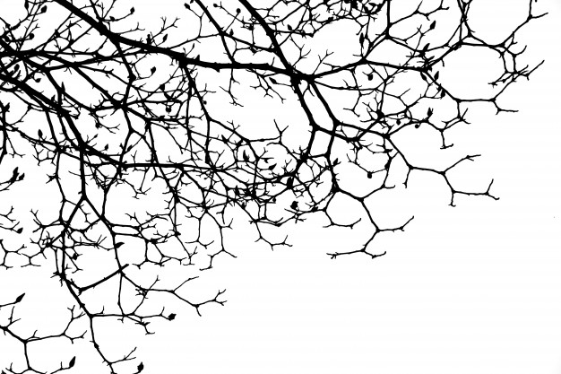dry-branches-of-a-tree_1136-6
